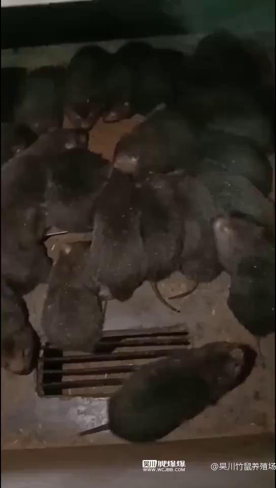 脚爆爆集市